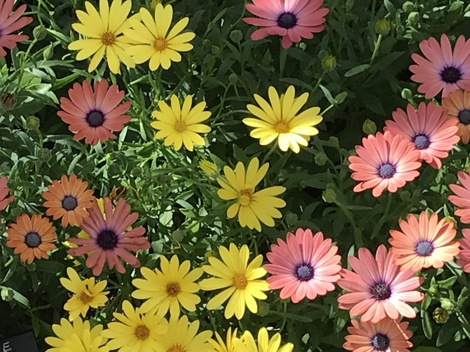 Spring flowers in the Desert Botanical Garden in Phoenix