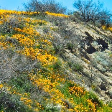 Springtime in the Arizona Desert