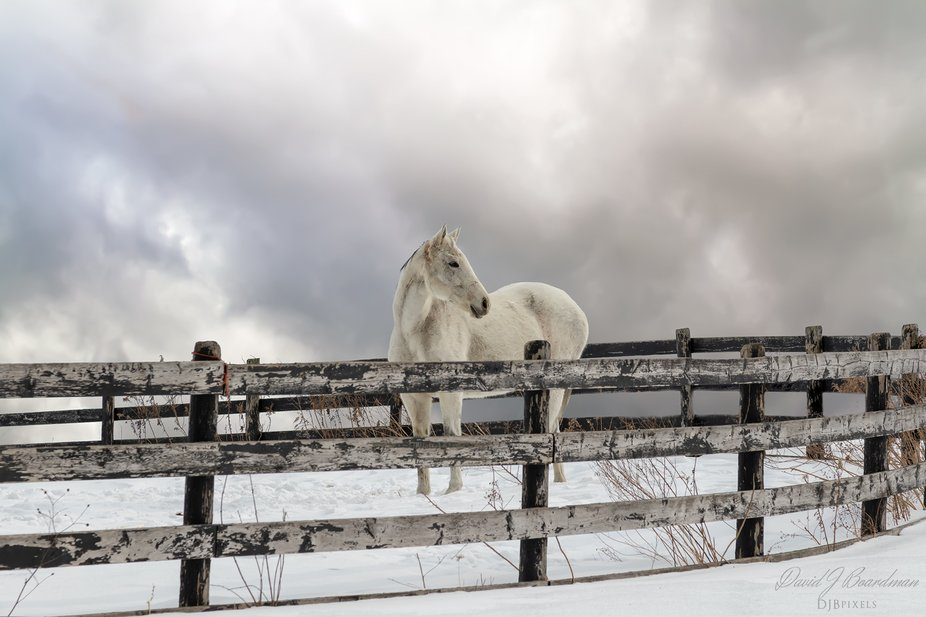 Winter Horse (revisited)