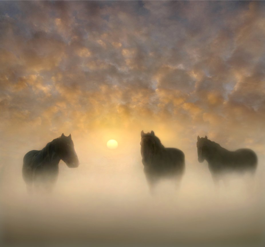 Three horses standing in a field on a foggy sunrise