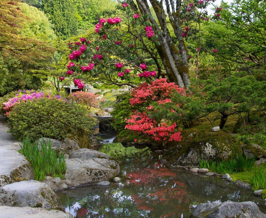 Seattle Japanese Tea Garden 2018