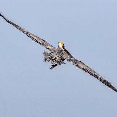 What a wingspan!