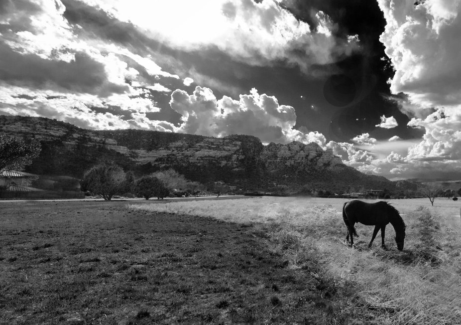 This image was captured by #Melody Pepper at the H&H horse rescue in Arizona