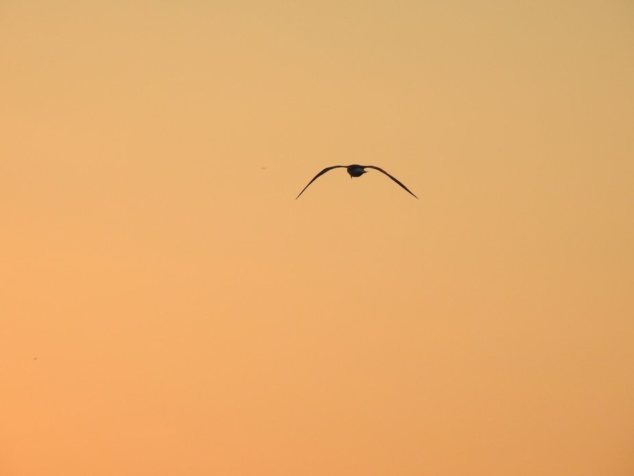 Birdy sunset