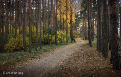 between the pines...