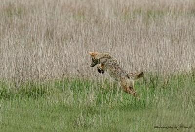 Leap of Faither