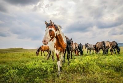horsepic-4