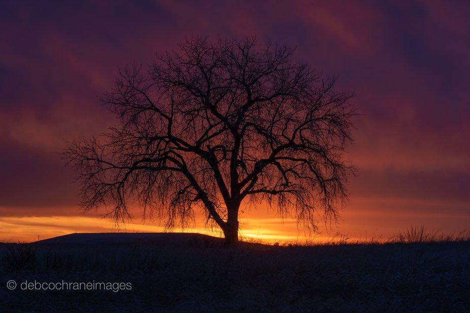 Sleeping Beauty Sunrise