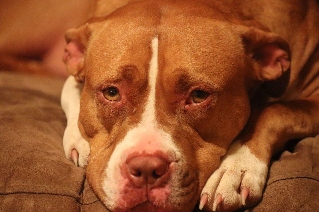 my Red dog