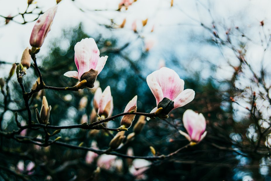 London Blossoms