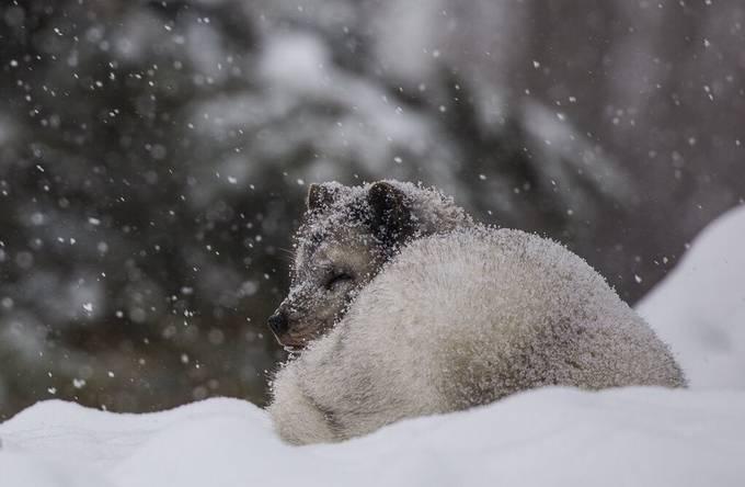 by RGanz - Winter Wildlife Photo Contest
