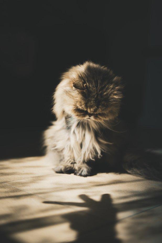 Tommy the Cat by sebastianstolinski - Social Exposure Photo Contest Vol 21