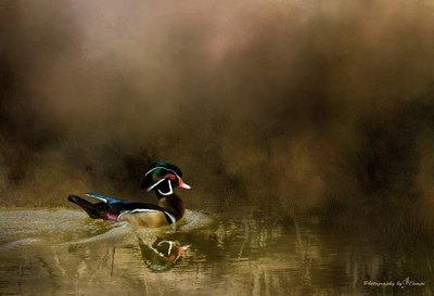 Legend of the Wood Duck