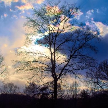 The sky has a prismatic look behind tall tree.