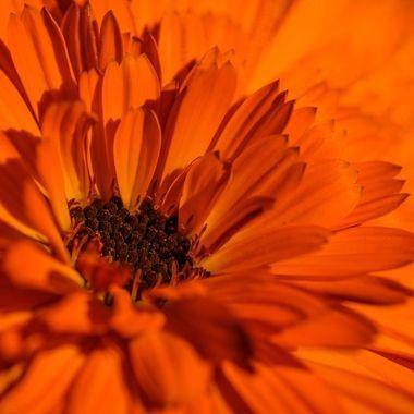 Experimental daisy macro ...
