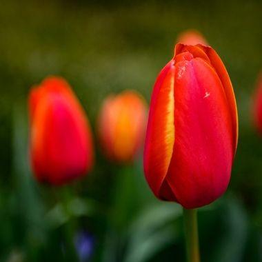 Spring in portrait ...