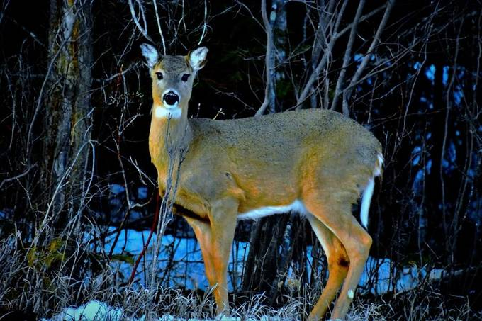 This young doe wasn't to afraid, I think she was hiding behind that very small tree.