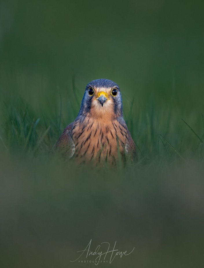 Who's a pretty boy then! by AndyHowePhotography - Monthly Pro Photo Contest Vol 48