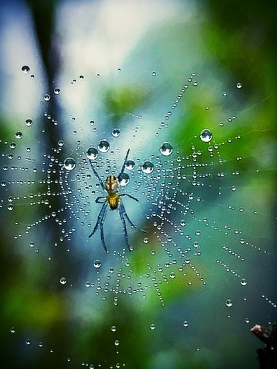 Spider and his home