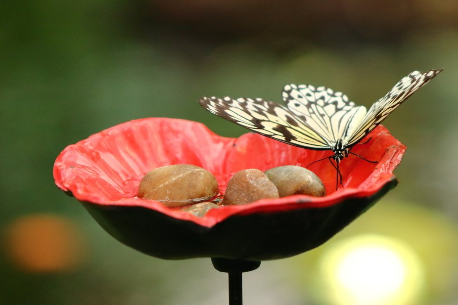 Butterfly in Flower Pot.JPG