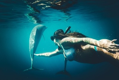 Mermaid and the Dolphins