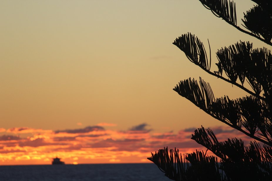 focused picture taken of tree and in the background is a beautiful sunset with a boat on the hori...