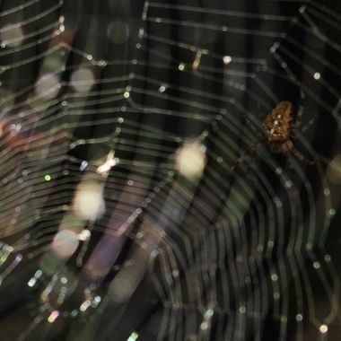 Spider Web of Rainbows