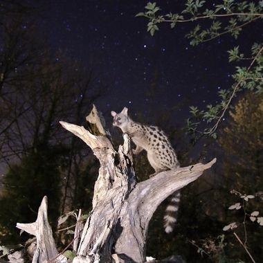 """Quiero iniciar una serie titulada """"Fauna y estrellas"""". Barrera de IR, dos flashes con difusores a 1/64, 30"""" de exp."""