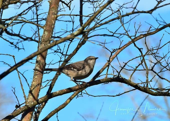 Bird, Crepe Myrtle, and Blue Sky