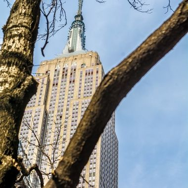 Empire State within the trees