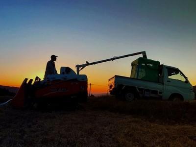 Farming After Dark