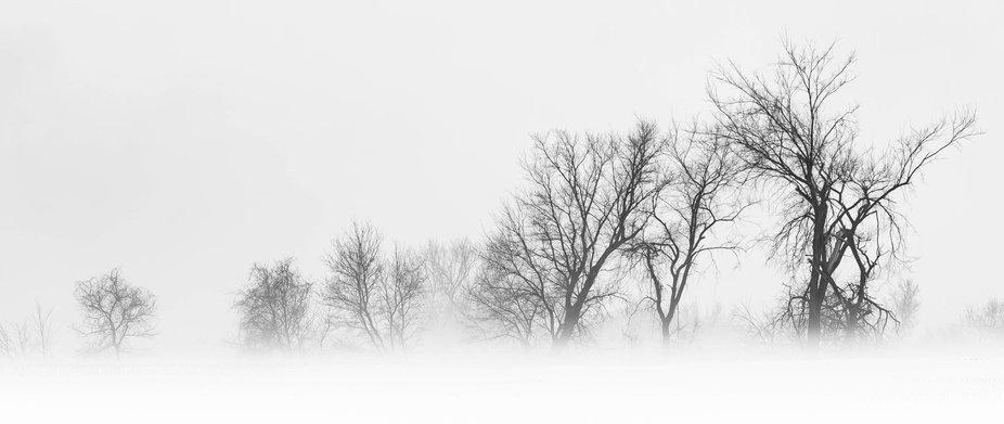 Line of trees across a foggy field.