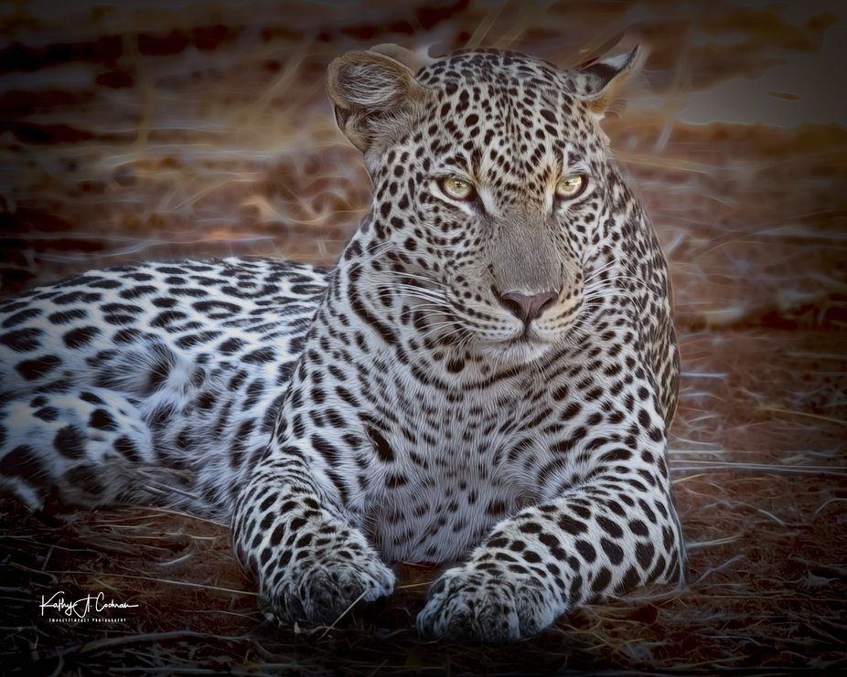 Leopard taking a moment