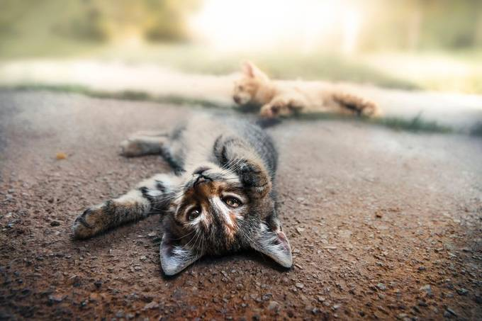Two kittens play by miskovic - Kittens Photo Contest