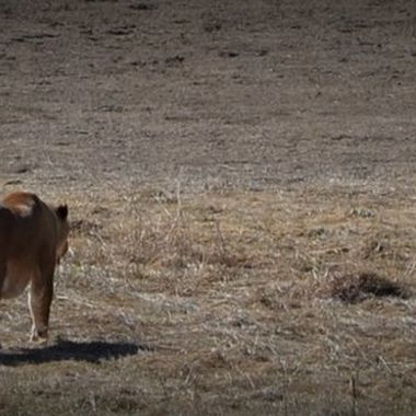 Lions saved from bad situation live a free life at the Wild Animal Sanctuary in Keenesburg, CO