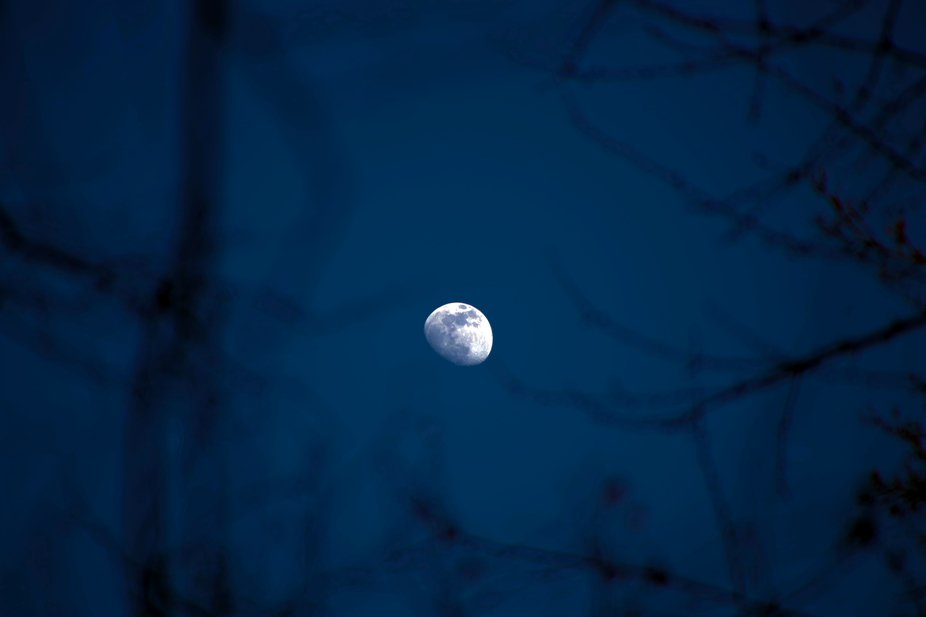 The moon in branch frame