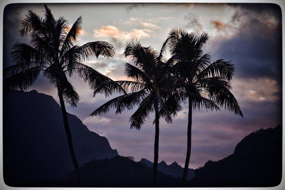 Beautiful palm trees in Hawaii