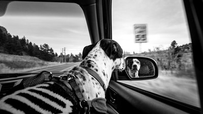 Road Trip Passenger
