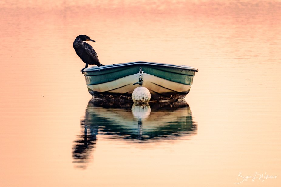 A cormorant sitting in a small boat watching for fish.