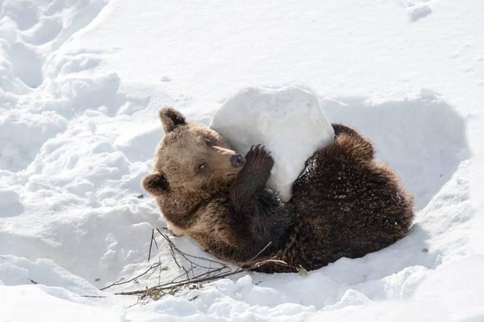 _8508562_73017Fun by Marston - Winter Wildlife Photo Contest