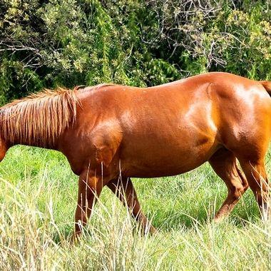 Healthy as a Horse