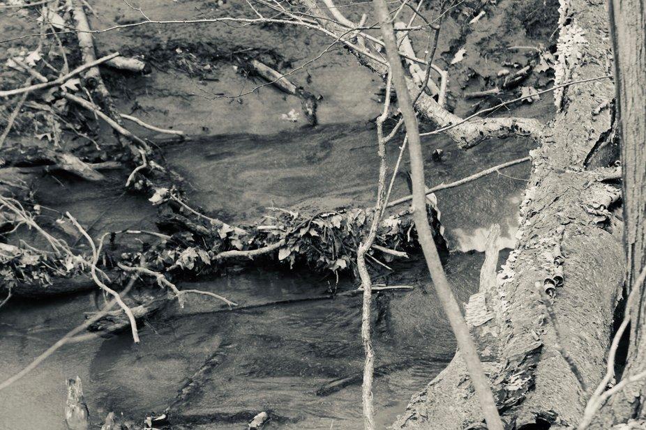 Doww By The Stream