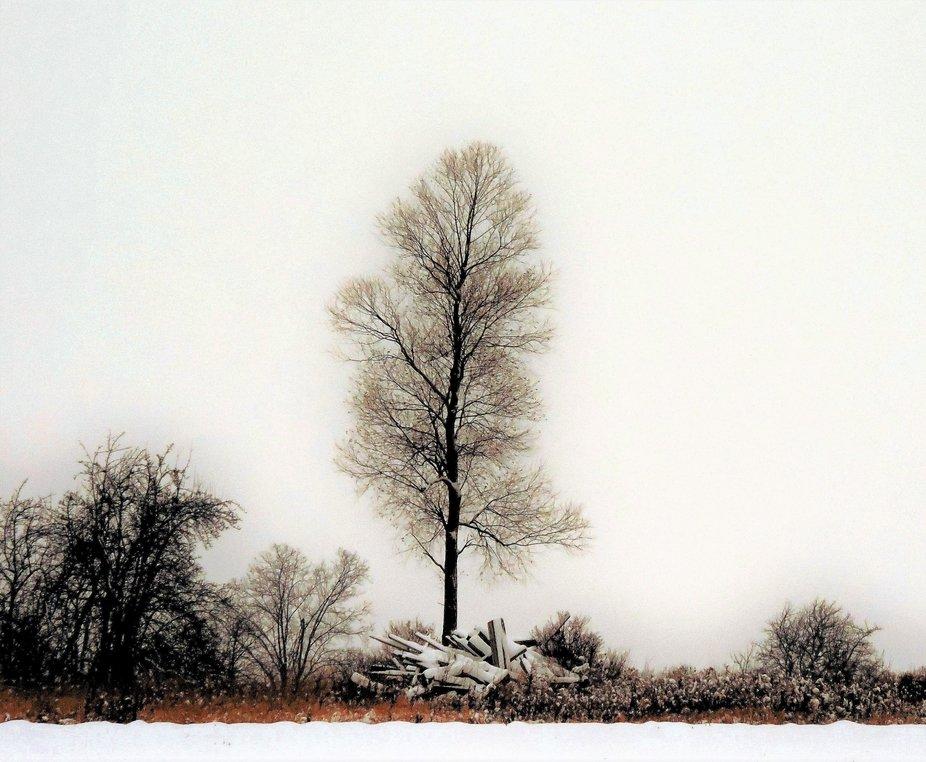 Natasha Tree