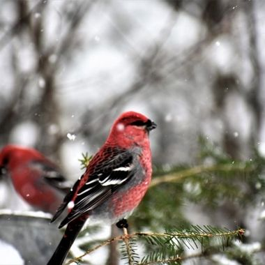 Taken on a snowny day by the bird feeder