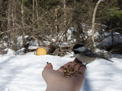 Silly people think these birds like to eat seeds off the ground when in reality they dont enjoy having their food tossed where people walked