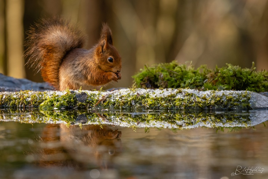 Squirrel reflection