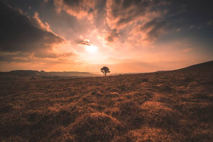 lonely  by armognadrien - Image Of The Month Photo Contest Vol 44