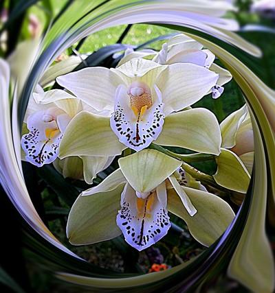 Meravigliosa orchidea, dedicata a Stefania F.