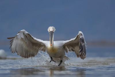 Landing
