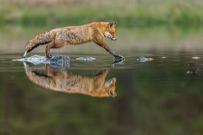 Jump by vladcech - Social Exposure Photo Contest Vol 21
